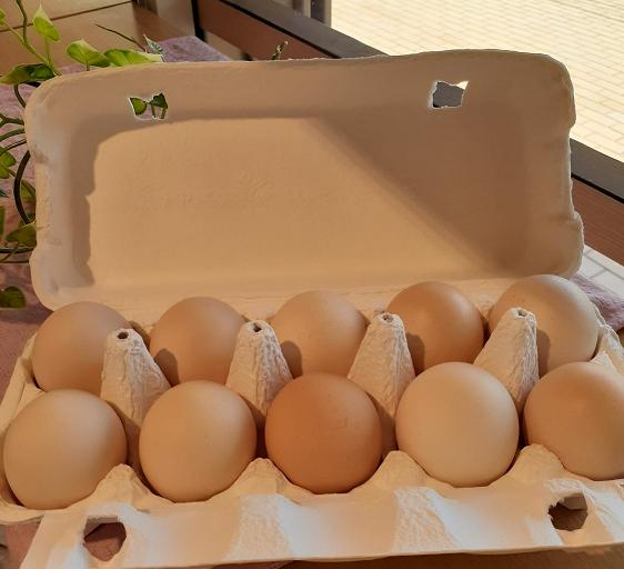 髙井養鶏の卵
